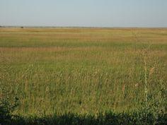 The Badlands, South Dakota - Prairie.