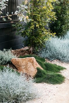 Relaxed native coastal planting at our Woolooware garden. Plants from 📸 by Australian Garden Design, Australian Native Garden, House Landscape, Garden Landscape Design, Modern Landscaping, Backyard Landscaping, Landscaping Edging, Blog Art, Coastal Gardens