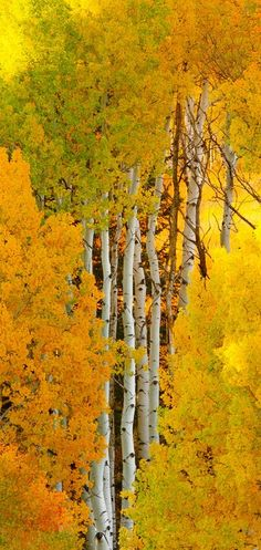 I'm thinking (wishing) this was taken in SW Colorado...If so, I'd sure like to find it someday.  :-)