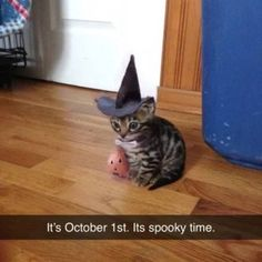 Silly Memes To Help Pass The Time – Stacey Corral - Baby Animals Spooky Memes, Silly Memes, Funny Cat Memes, Funny Cats, Lol Memes, Stupid Funny, Funny Stuff, Cute Funny Animals, Funny Animal Pictures
