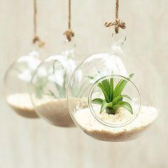 artlass Lot de 3 Suspension Vse Terrarium en verre Bougeoir rond mariage Home Deco Diamètre 10 cm: Amazon.fr: Cuisine & Maison