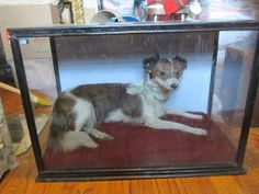 RARE Antique Victorian Taxidermy Dog Imported From UK on Etsy, $1,200.00