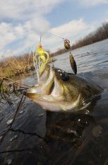 Bass Fishing Guideline - Enhance your Bass Fishing Knowledge - http://bassfishingmaniacs.com/bass-fishing-guideline-enhance-bass-fishing-knowledge/