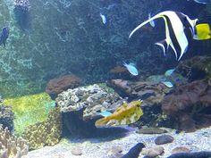 https://faaxaal.blogspot.com/2018/04/fonds-marins-de-la-reunion.html - Fonds marins de la Réunion - Paysages de la Réunion - Sites touristiques de la Réunion - Littoral de la réunion - Paysages littoraux de la Réunion - Vie marine de la Réunion - Récifs littoraux - Faune marine - Aquarium de la Réunion - À voir et à faire à la Réunion - Rivages réunionnais - Les incontournables de la Réunion