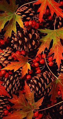 Herbst - autumn pine cones and leaves Autumn Day, Autumn Leaves, Winter, Maple Leaves, Autumn Nature, Autumn Scenes, Autumn Aesthetic, Seasons Of The Year, Fall Pictures