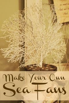 Miss Kopy Kat blog: Make Your Own Sea Fans from cedar clippings