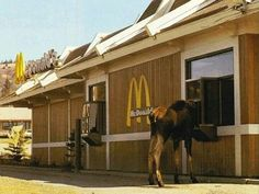 Only in Alaska: .....a cheese burger and big mac....yes, take away, please....
