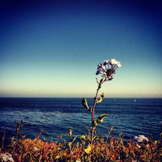 Newport Beach, California. Hike along the bluffs.
