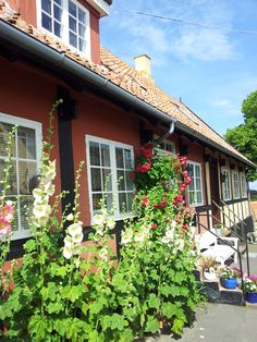 Bindingsværkshus, Svaneke. Bornholmeridyl.