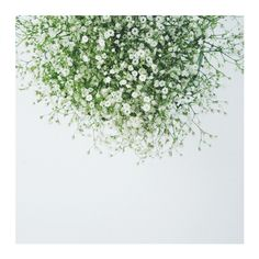 """Gypsophila"" - Art Print by Marabou Design in beautiful frame options and a variety of sizes."