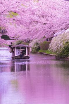 Cherry Blossom, Kyoto, Japan via αcafe | My Sony Club | ソニー #桜 #CherryBlossom #Kyoto