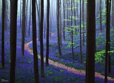 Though this may look like a scene straight out of a fairy-tale, this blue forest is, in fact, real.
