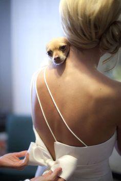 Wedding Pets: Gorgeous Photo Ideas For Your Album ❤ See more: http://www.weddingforward.com/wedding-pets/ #weddings