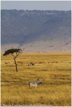 Maasai Mara Game Reserve Kenya