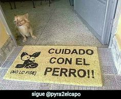 Cuidado con el perro  #humor #funny @Pyra2elcapo