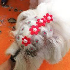 Penteados cachorra