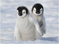 Ich lieeeeeebe Pinguine