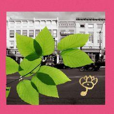 Music   SAPiEN Massachusetts, Plant Leaves, Awesome, Music, Plants, Instagram, Art, Musica, Art Background