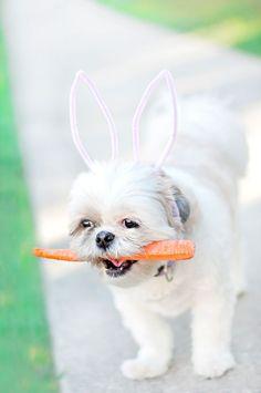 DIY: 2 Minute Bunny Ears | Pretty Fluffy.