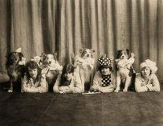 Circus (?) Collies