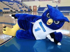 Havre de Grace, MD - The mascot for the Fighting Owls has a special new look. | Patch