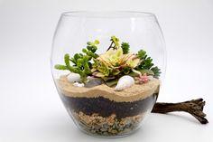 Succulent terrarium kit in tulip vase, fish bowl succulent terrarium, Miniature garden, DIY terrarium kit, , Succulent garden, Fairy garden
