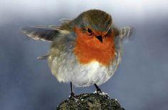What a cute robin!