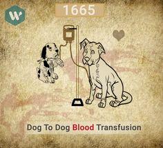 Dog to Dog Blood Transfusion #MobileApp #DoWhistle #BloodDonor