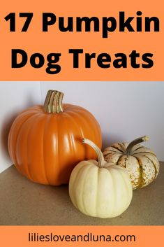 17 pumpkin dog treat recipes including no-bake, baked, and peanut butter free dog treats. Dog Pumpkin, Frozen Pumpkin, Pumpkin Dog Treats, Diy Dog Treats, Homemade Dog Treats, Healthy Dog Treats, Pumpkin Spice, Pumpkin Recipes For Dogs, Dog Treat Recipes