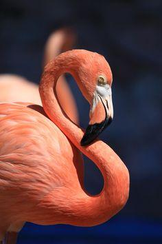 Flamingo von libertatem