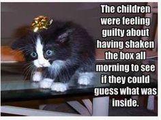 Don't shake the christmas gift lol
