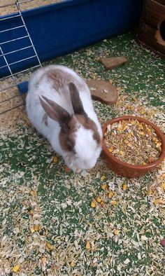 My little rabbit :3