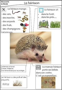 Le hérisson - Science and Nature Animal Facts For Kids, Fun Facts About Animals, List Of Animals, Animals For Kids, Animal List, Science For Kids, Science And Nature, Grade 2 Science, Core French