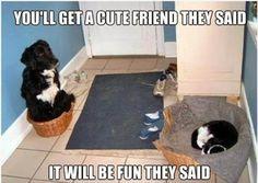 Funny ~