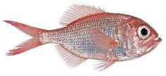 Αποτέλεσμα εικόνας για fish