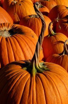 Orange pumpkins with twisty tops.