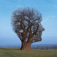 Tête d'arbre