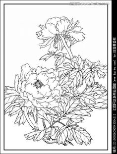 Пионы для батика 工笔画线描花卉画谱 牡丹篇