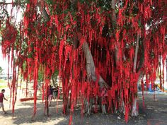 Wish Tree at Redang Beach, Sekinchan