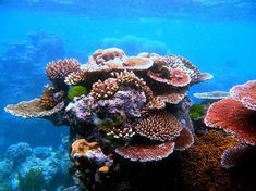 Coral reefs are one of the most diverse ecosystems on the planet. What are the abiotic and biotic interactions that structure this diverse ecosystem?