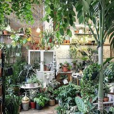 Weekends are for plant shopping, like at the wonderful @conservatory_archives in London, which is celebrating its first birthday this week! :@conservatory_archives #urbanjunglebloggers