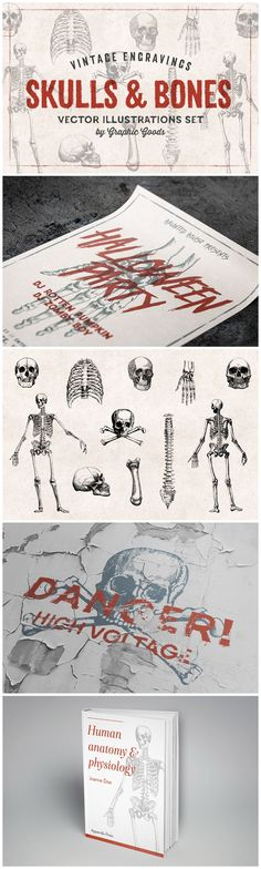 11 Skulls & Bones Illustration Set - Vintage Human Anatomy Graphics by Graphic Goods Halloween Party Invitations, Retro Logos, Be A Nice Human, Skull And Bones, Human Anatomy, Graphic Illustration, Color Change, Skulls, Vintage Inspired