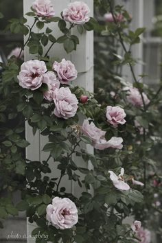 Captivating Why Rose Gardening Is So Addictive Ideas. Stupefying Why Rose Gardening Is So Addictive Ideas. Flowers Nature, Pink Flowers, Beautiful Flowers, Planting Succulents, Planting Flowers, Gerbera, Pink Garden, Raised Garden Beds, Herb Garden