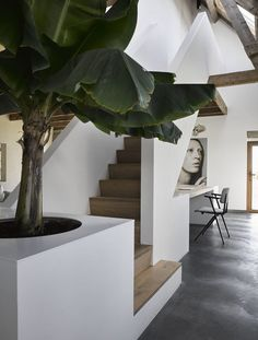 Stairs, art, wood, concrete, farm, tree in house, ZW6 interior, ZECC architects