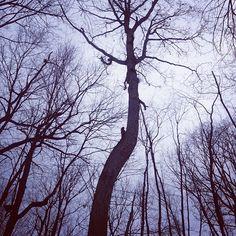 A winter scene at Legacy's Johnson Preserve