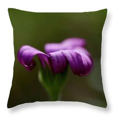 Petal curls Throw Pillow for Sale by Helen Kelly Pillow Sale, Poplin Fabric, Fine Art America, Curls, Throw Pillows, Stylish, Pretty, Image, Cushions