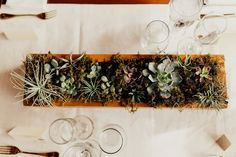 15 Succulent Wedding Décor Ideas for a Desert-Chic Vibe - If you prefer natural greenery to colorful flowers, try adding some succulent wedding decor to your big day. succulent, centerpiece, garden, plant {Addison Jones Photography} Fall Wedding Centerpieces, Fall Wedding Bouquets, Fall Wedding Cakes, Fall Wedding Flowers, Fall Wedding Colors, Wedding Decorations, Wedding Ideas, Wedding Blog, Wedding Greenery