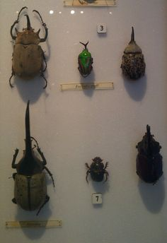 Insect collection - Huntarian Museum