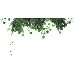 Foliage ❤ liked on Polyvore featuring plants, backgrounds, flowers, nature, fillers, detail and embellishment