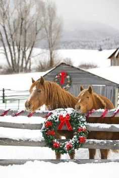 To plow horses with Christmas wreath on a fence